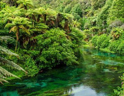Hire A Skip Bin In Waikato